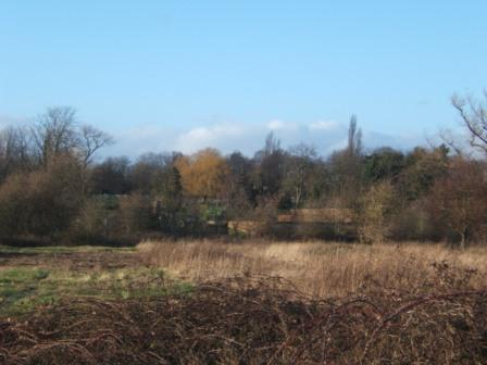 South Norwood Country Park 1-2-140130